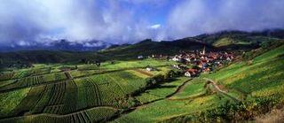 Crta_zvardon Village de Niedermorschwihr